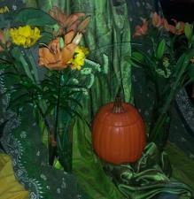 detail, pumpkin